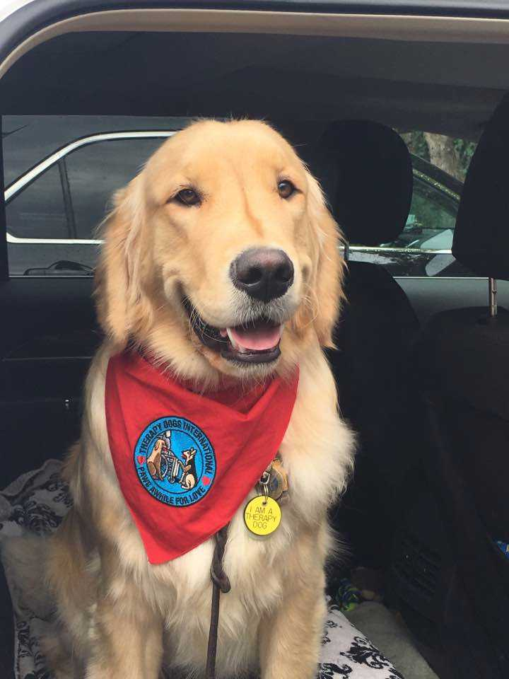 Jake with Therapy Dogs International bandana