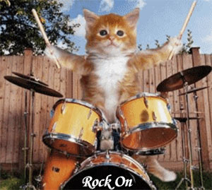 Kitten playing drums