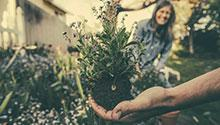 Hand holding a plant in foreground, with woman smiling in background