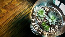 succulent plants in a glass vase