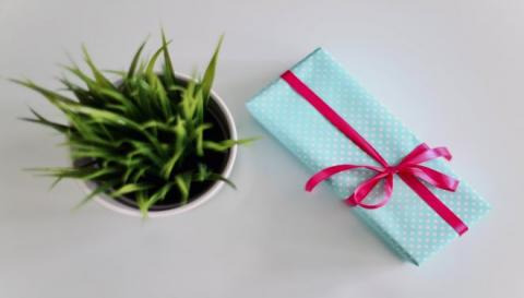 Photo of wrapped gift next to a plant.