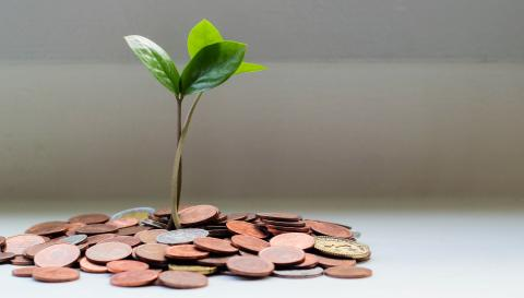 plant growing out of a pile of coins