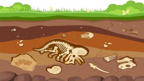 Illustration of fossils underground