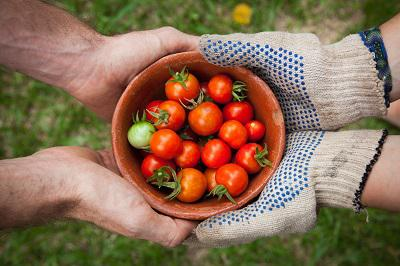Photo of hands holding a small bowl with cherry tomatoes