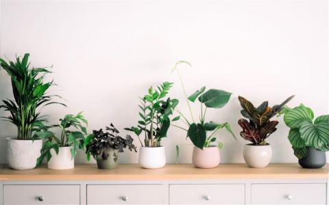 Photograph of a variety of houseplants sitting on a table.