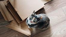 Cat with cardboard - Credit Anete Lusina