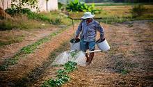 Farm worker watering plants
