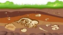 Illustration of fossils underground