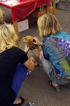 Patrons Visiting with One of the Dogs