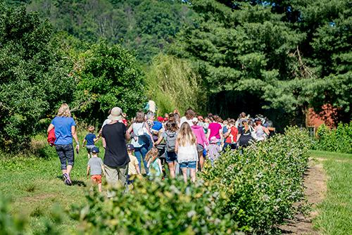 Crowd walks through orchard to storytime