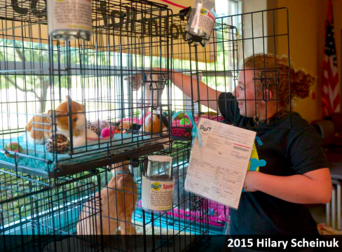 Project Purr volunteer setting-up cages