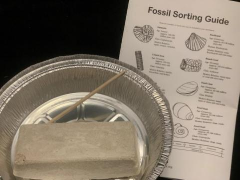 Photo of materials needed for fossil dig