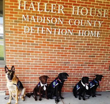 Five therapy dogs from Got Your Six Support Dogs sit in front of Madison County Juvenile Detention Center.