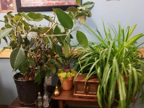 A shelf with plants