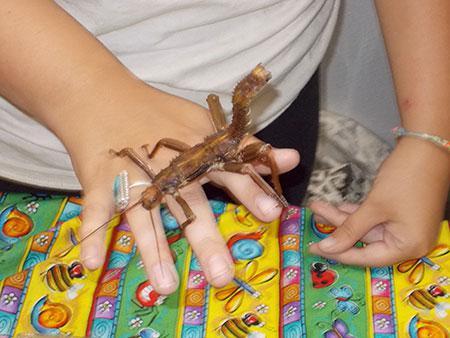 Praying mantis on a Bug Olympics presenter's hand